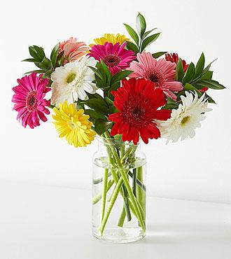 Colorful World Gerbera Daisy Bouquet - 15 Stems