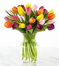 Rush of Color Assorted Tulip Bouquet  - 25 Stems - VASE INCLUDED