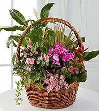Pink Inspirations Dish Garden