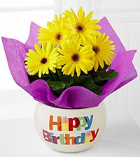 Happy Birthday Brights Gerbera Daisy Plant